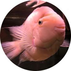 かわいい熱帯魚たち