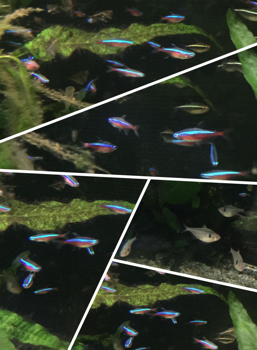 p_fish_01