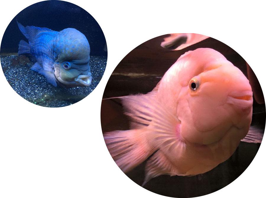 p_fish_02