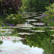 大型連休INモネの庭